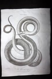 Linnaeus & Sibly C1805 Antique Print. The Panama Viper Snake